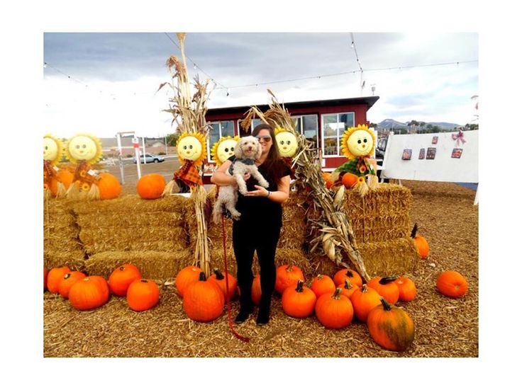 // N E W // #ontheblog: We visited Stu Miller's pumpkin patch in Henderson (Las Vegas) on Friday & had a great time!  ______________________________________ Read the recap here: http://ift.tt/2eoaoNU (link in bio) #stumillers #pumpkinpatch #henderson #lasvegas #halloween