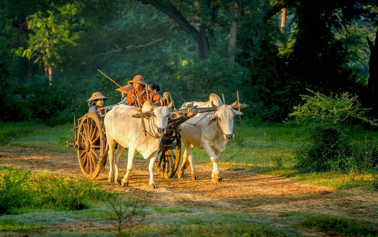 Myanmar / Burma. A voyage to Myanmar / Burma, Asia - Yangon, Mandalay, Naypyidaw, Mawlamyaing, Bago, Pathein, Monywa, Meiktila, Sittwe, Mergui...  http://traveladventureeverywhere.blogspot.com/2012/09/a-voyage-to-myanmar-burma-asia-yangon.html