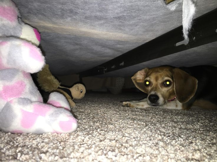 Came across my dog's butt sticking out from under the bed. I think I interrupted some sort of secret meeting. - http://2funnys.com/came-across-my-dogs-butt-sticking-out-from-under-the-bed-i-think-i-interrupted-some-sort-of-secret-meeting/ - Bed, butt, Dogs, interrupted, meeting, secret, sort, sticking