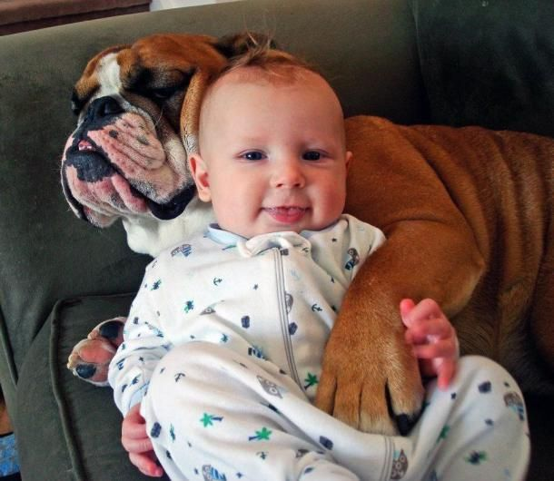 Baby has a big loving paw to hold! #dogs #pets #Bulldogs #children Facebook.com/sodoggonefunny