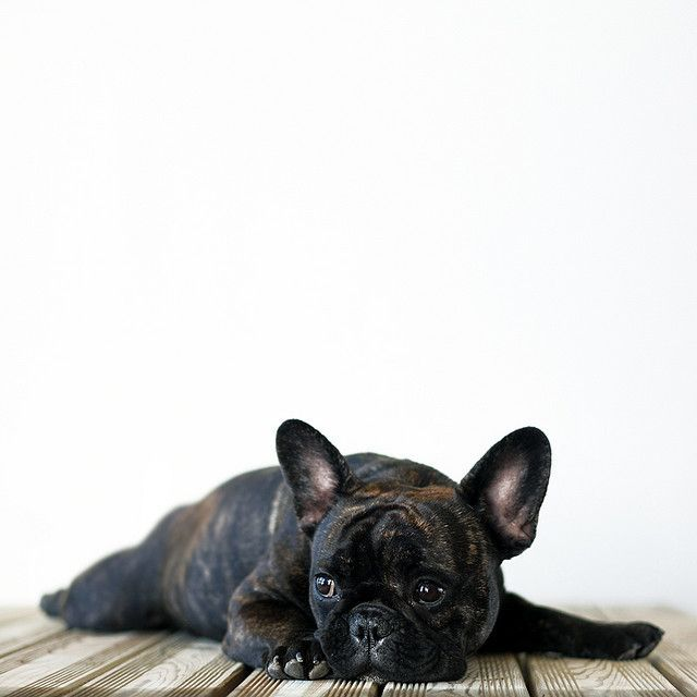 French Bulldog One Day When We Re Older You Ll Surprise Me With