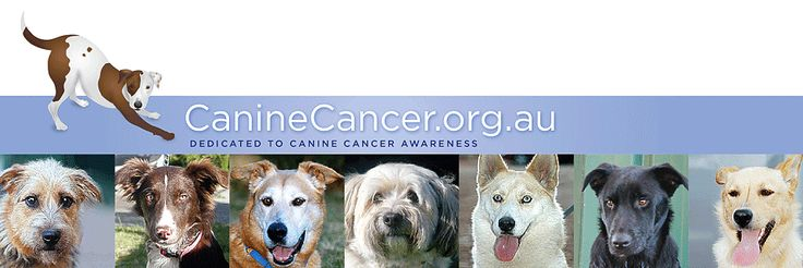 Live in the USA or Canada & have a DOG with or without cancer? 27 different breeds needed for blood samples. http://www.caninecancer.org.au/researchusaandcanada.html