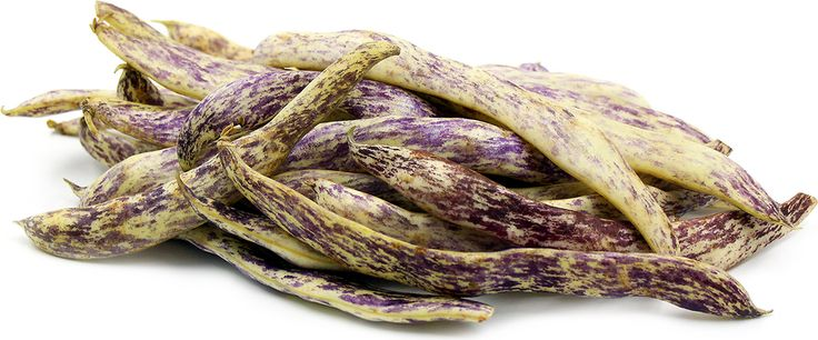 The Dragon Tongue bean can be utilized at multiple stages of maturity. When harvested young the entire bean, shell and seeds are edible. Young beans have a warm...