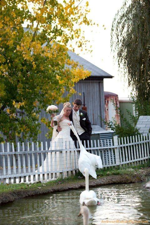 I told you a Swan wedding theme was dangerous!   #Funny #Hilarious #wedding #weddingphoto . www.weddingplannerblog.nl/trouwceremonie-toptrouwlocaties-boathouse-havenvanhuizen