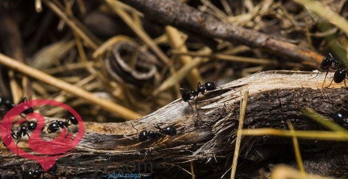 تفسير رؤية حلم النمل فى المنام للامام الصادق 2019 5