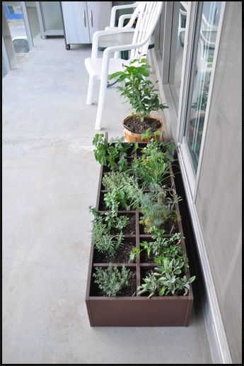CD Rack Turned Balcony Herb Garden