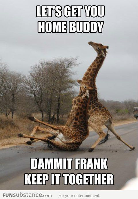 56268021b478c4a2225488f5422f4c55 so funny funny shit 20 best you're drunk images on pinterest funny shit, funny stuff,Go Home Bessie You Re Drunk Meme