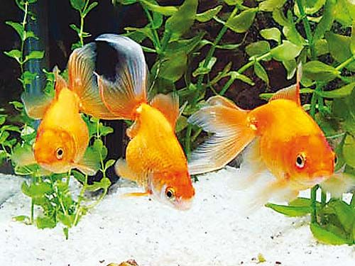 Best 25 especies de peces ideas on pinterest tipos de for Especies de peces