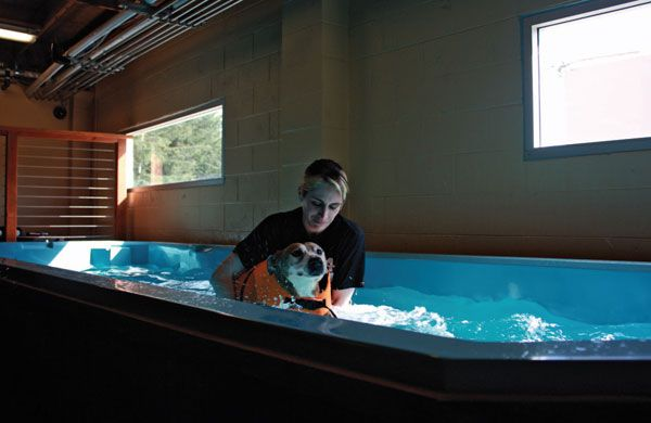 Dogs Hydrotherapy Pools Near