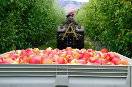 Stemilt's signature apple variety, Piñata®, is back in season and once again, making waves in produce departments across the U.S. and in Canada. While there is always excitement for the apple.....