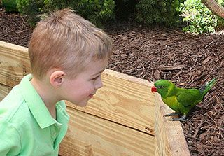 On hot days when you would like to stay close to sea life, but escape the beating sun visit the Maritime Aquarium in Norwalk, Connecticut! #aquarium #fish #maritime #ct #norwalk #jeanbailey #summer #sea #ocean #fish #fun #lorikeet #bird #tropical #family http://connecticutliving.net/jeannebailey/2013/07/maritime-aquarium-norwalk-connecticut/