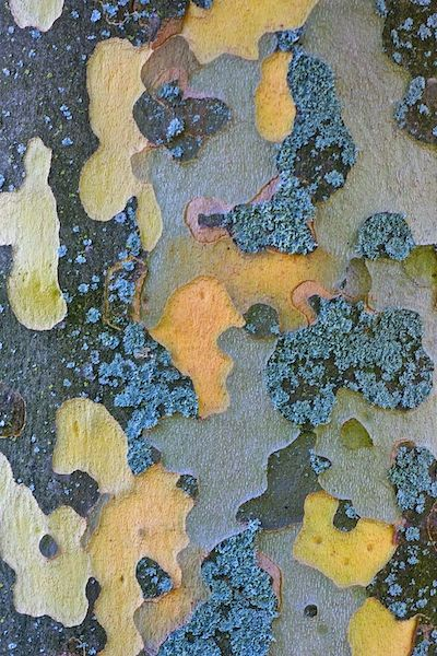 elm tree bark close up
