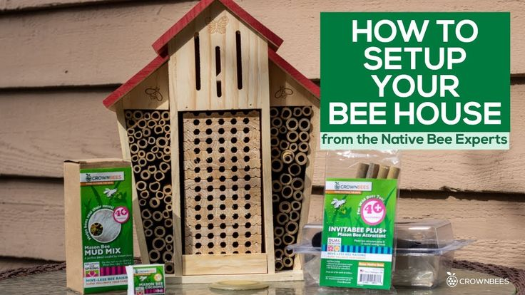 Learn how to setup your bee house from the Native Bee
