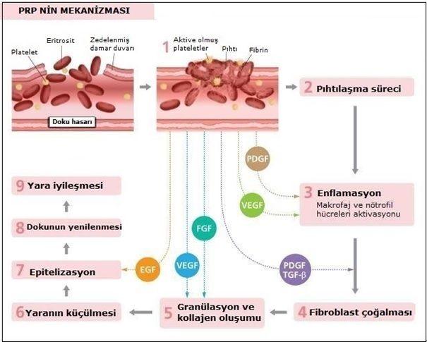 PRP Tedavisinin Etki Mekanizması Nasıl?