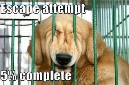 Escape attempt 5percent complete Funny dog photo with captions