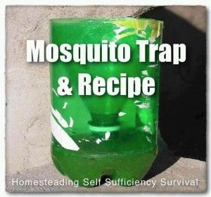 Honey+Bee+Traps+Homemade | ... Friendly Tips » Blog Archive » BOTTLE TRAP METHOD FOR MOSQUITOES