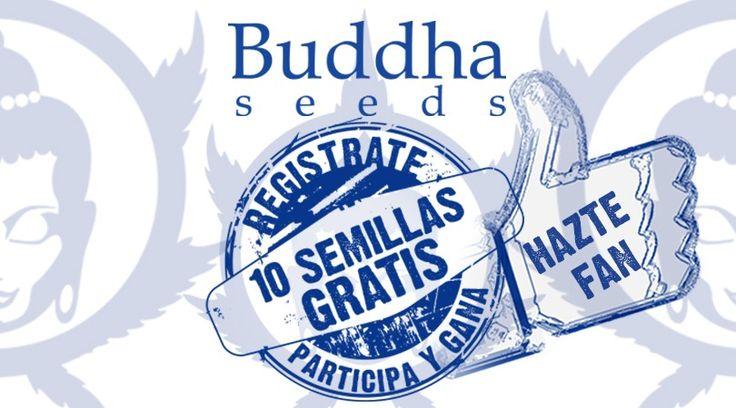 Gana un paquete de 10 semillas autoflorecientes de Buddha Seeds