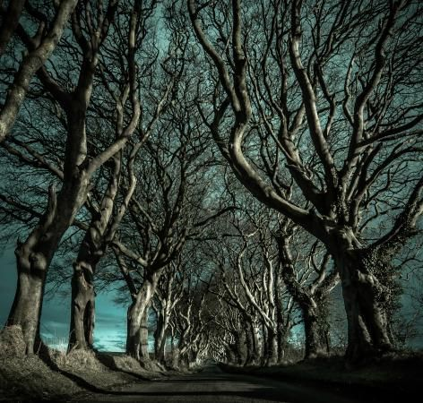The Dark Hedges, Ballymoney Picture: Shadows - Check out TripAdvisor members' 701 candid photos and videos of The Dark Hedges