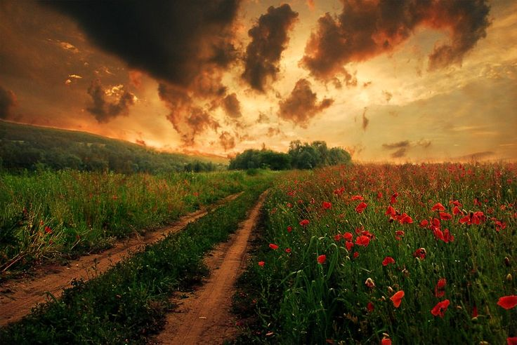 There's something about poppy fields