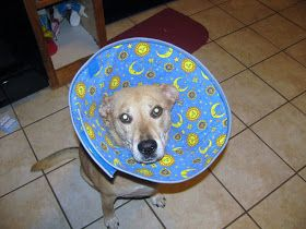 This link works! Dog cone tutorial.