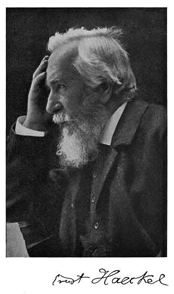 Ernst Haeckel - German biologist, naturalist, philosopher, physician, professor and artist who discovered, described and named thousands of new species, mapped a genealogical tree relating all life forms, and coined many terms in biology, including anthropogeny, ecology, phylum, phylogeny, stem cell, and the kingdom Protista.