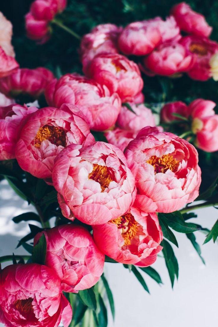 вот картинки на телефон с цветами пионы именно