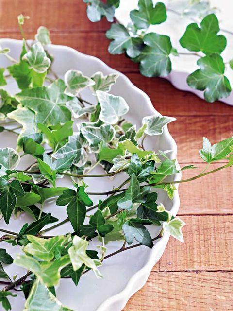 Hiedra: perfecta para interior y exterior - Cuidados y tipos Annual Plants, Interior Exterior, House Plants, Ivy, Planting Flowers, Spinach, Succulents, Herbs, Leaves