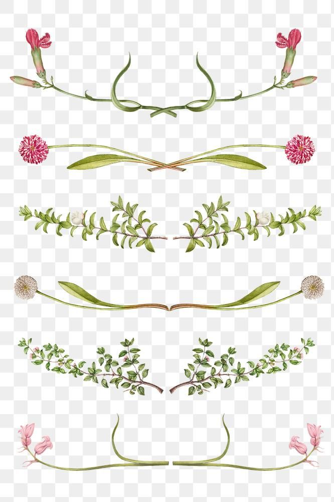 Png Flower Flourish Divider Element Set Remix From The Model Book Of Calligraphy Joris Hoefnagel And Georg Bocskay Free Free Illustrations Flourish Flowers