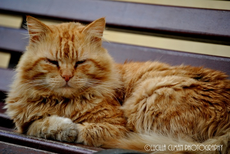 Red cat in Otranto ..