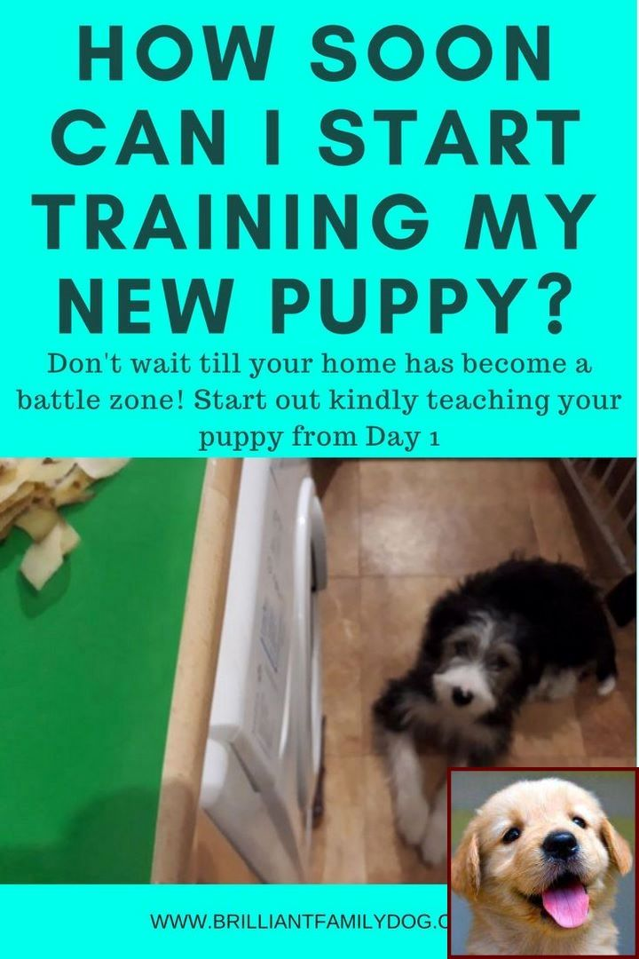 House Training A Puppy In An Apartment And Dog Training Classes Bristol Dog Training Puppy Training Puppies