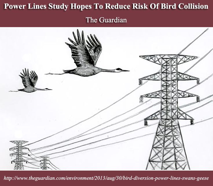 Power Lines Study Hopes To Reduce Risk Of Bird Collision   The Guardian   http://www.theguardian.com/environment/2013/aug/30/bird-diversion-power-lines-swans-geese