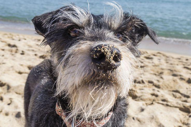 Trufa feliz en la playa, en Barcelona