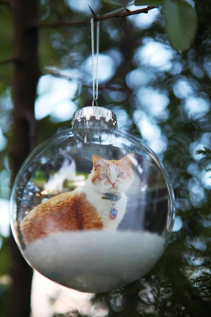DIY Photo Ornaments | Evermine Blog | cut out photo of pet, child, even a home; roll and insert into clear ball, put layer of snowy epsom salts in bottom. For image equally finished on both sides: flip the photo and print a reversed copy, cut each out, glue together.