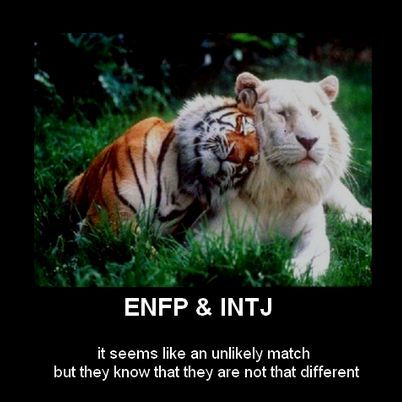 ENFP and INTJ relationships ~ they know they are not that different! | (link to article and videos)