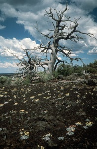 Craters of the Moon, Arco, Idaho