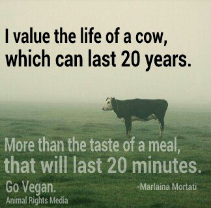 Pictures Of Animals With Quotes: 1000+ Images About Go Vegan On Pinterest