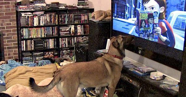 Hij filmt stiekem de hond die film kijkt - Kijk goed wat hij doet als zijn favoriete film begint….