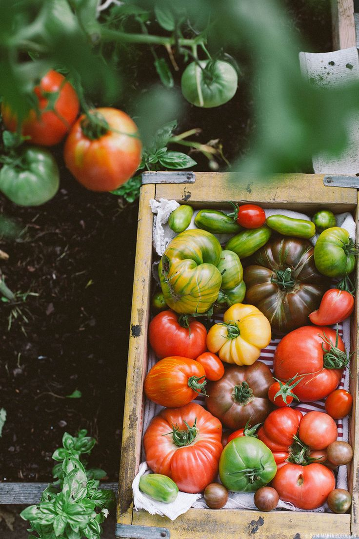 Tomato Recipes  Martha Stewart