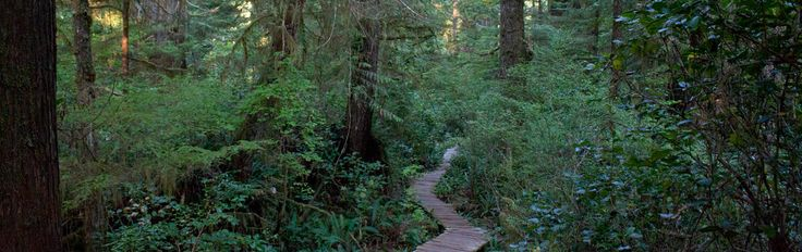 A list and map of hiking trails located near Tofino, Ucluelet, and in the Pacific Rim National Park on Vancouver Island hiking trails.