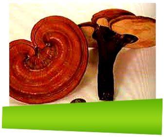 Fulfix. ingredienser en produkt mot håravfall som innehåller Gotu Kola (Centella asiatica), He Shou Wu (Fallopia multiflora), Saw Palmetto (Serenoa repens), Magnesium, Siberiansk Ginseng (Eleutherococcus senticosus), Ginkgo Biloba (Maidenhair Tree), Brännässlor (Urtica dioica), Druvkärnor (Linoleic acid), Keratin (Hydrolysed protein) och vad de är bra för