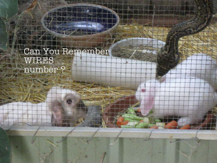 Python rabbits animal rescue
