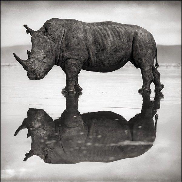 Rhino on Lake, Nakuru 2007 Nick Brandt