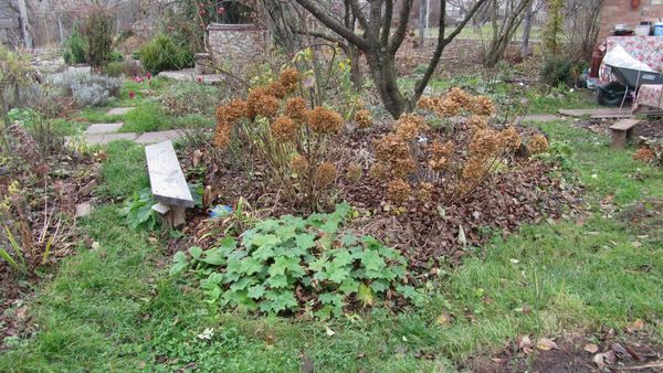 осенняя уборка сада и осенние посадки под зиму