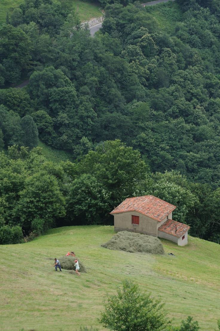 Labores agrícolas en Montaña Central de Asturias España // Agricultural works in Central Mountain of #Asturias Spain