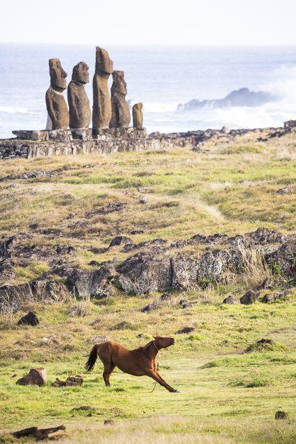 Easter Island       モアイとストレッチするウマ(チリ領イースター島)