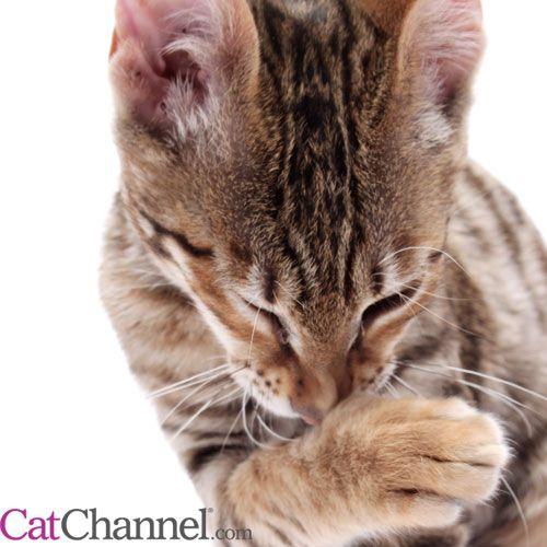 Six Cat Sneezing Scenarios: Reasons your Cat May Be Sneezing
