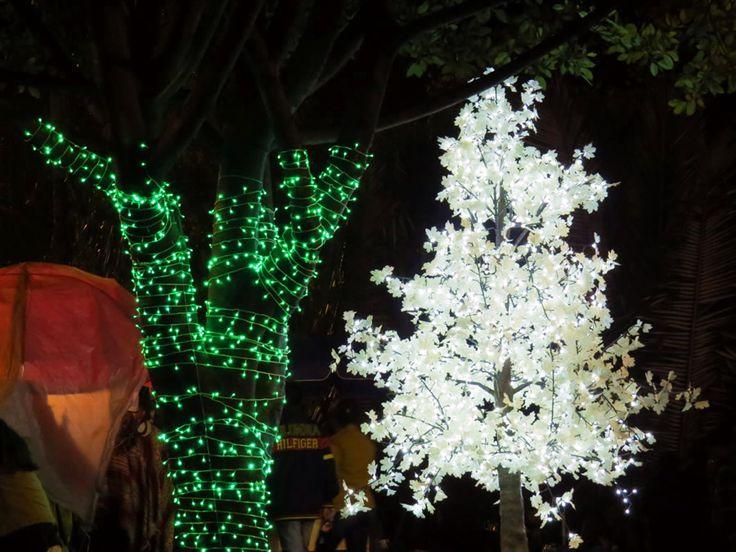 19. Árboles de Navidad en el Parque Nacional