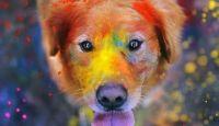 Dogs Wallpaper For Macbook Air Hd 24 Thumb