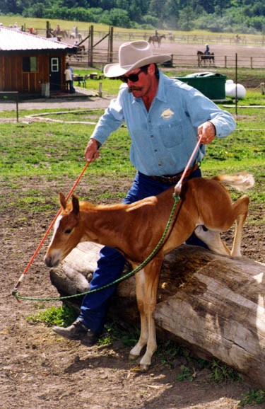 Pat Parelli Natural Horsemanship: Early foundation!