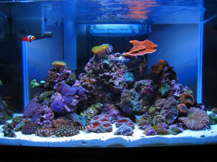 D 39 espresso 39 s 5 gallon reef tank reef tank aquarium for What do i need for a fish tank